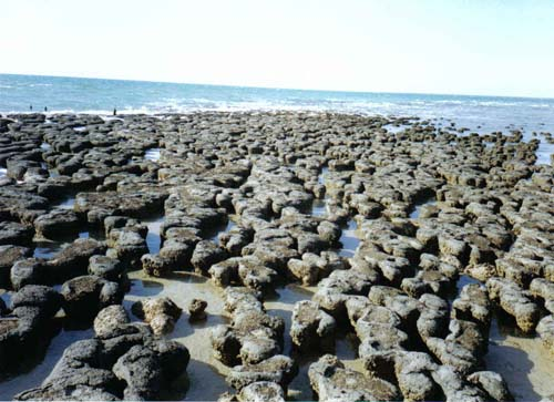 Shark Bay Stromatolites Shark Bay Stromatolites
